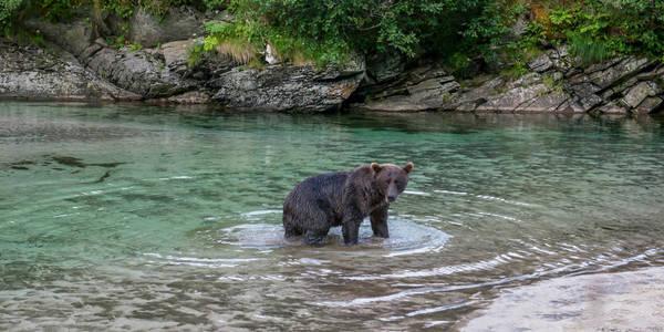 Bear Pool