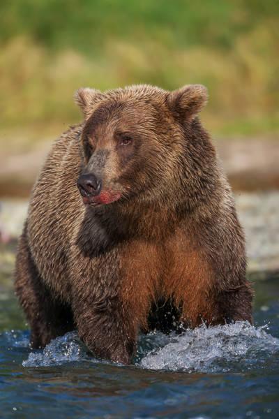 Lipstick On A Bear