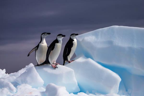 Three-Pack On Ice