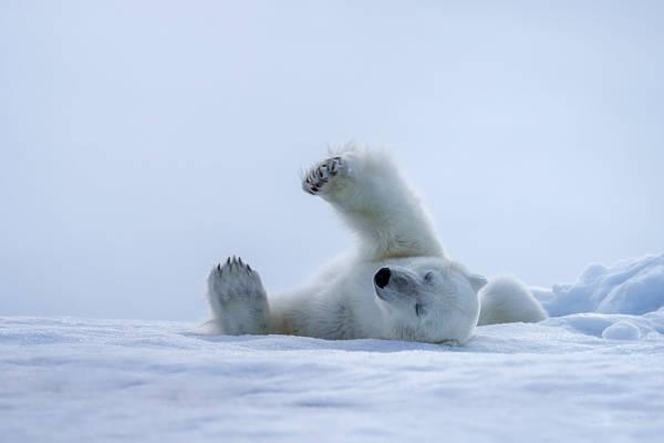Snow Stretch