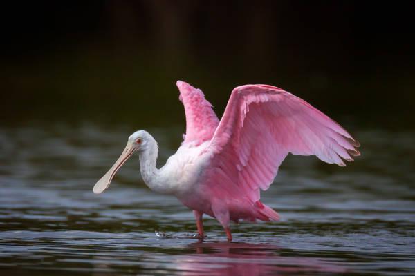 Pink Pre-flight