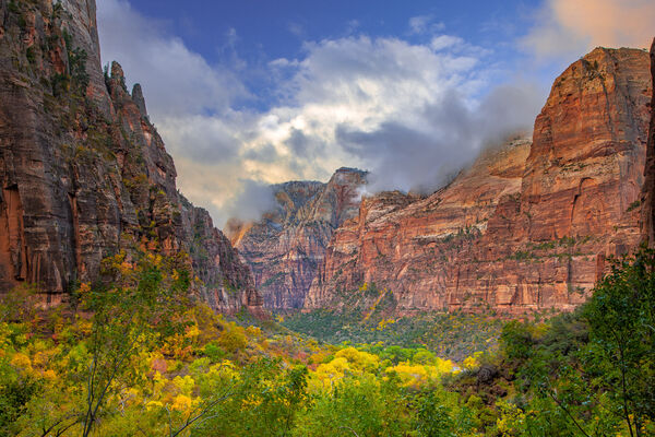 Utah, Zion Park, Canyon, Fall Color
