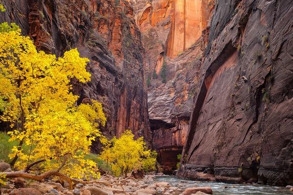 Utah, Zion Park, The Narrows, Fall Color