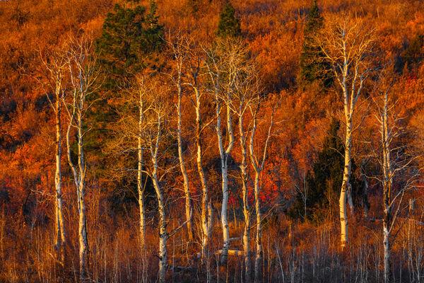Utah, Zion, National Park, Trees, Kolob Canyon, Warmth, Sunrise