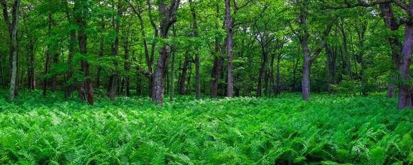 Green Expanse