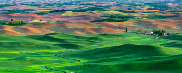 Washington, Palouse, field, green, farm, limited edition, photograph, fine art, landscape, Springtime