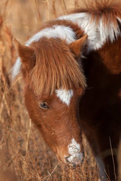 Face Of A Pony