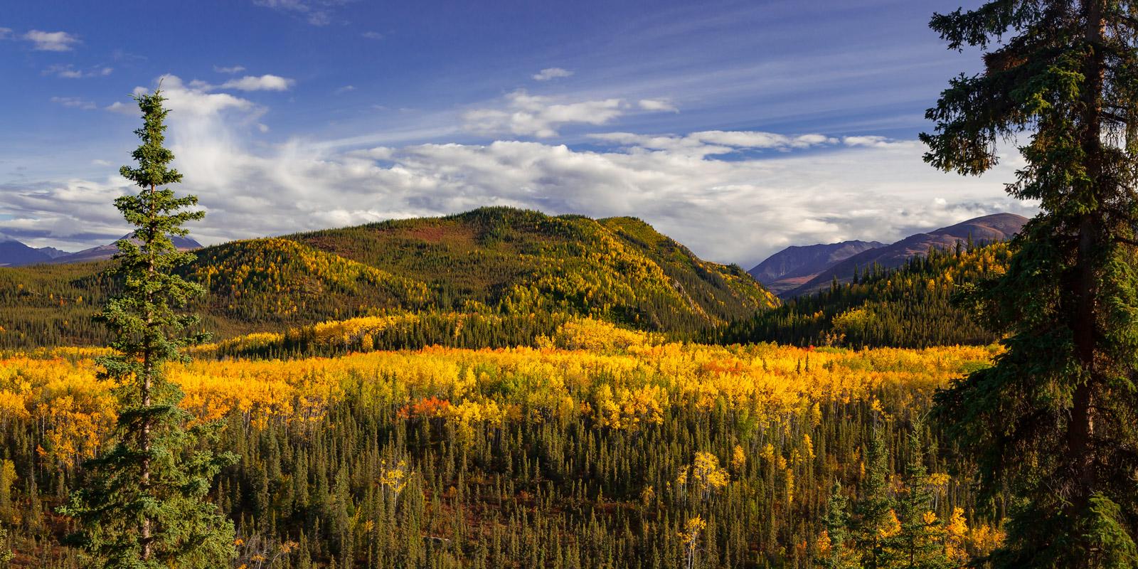 Alaska, Denali, Fall, Color, limited edition, photograph, fine art, landscape, fall color, photo