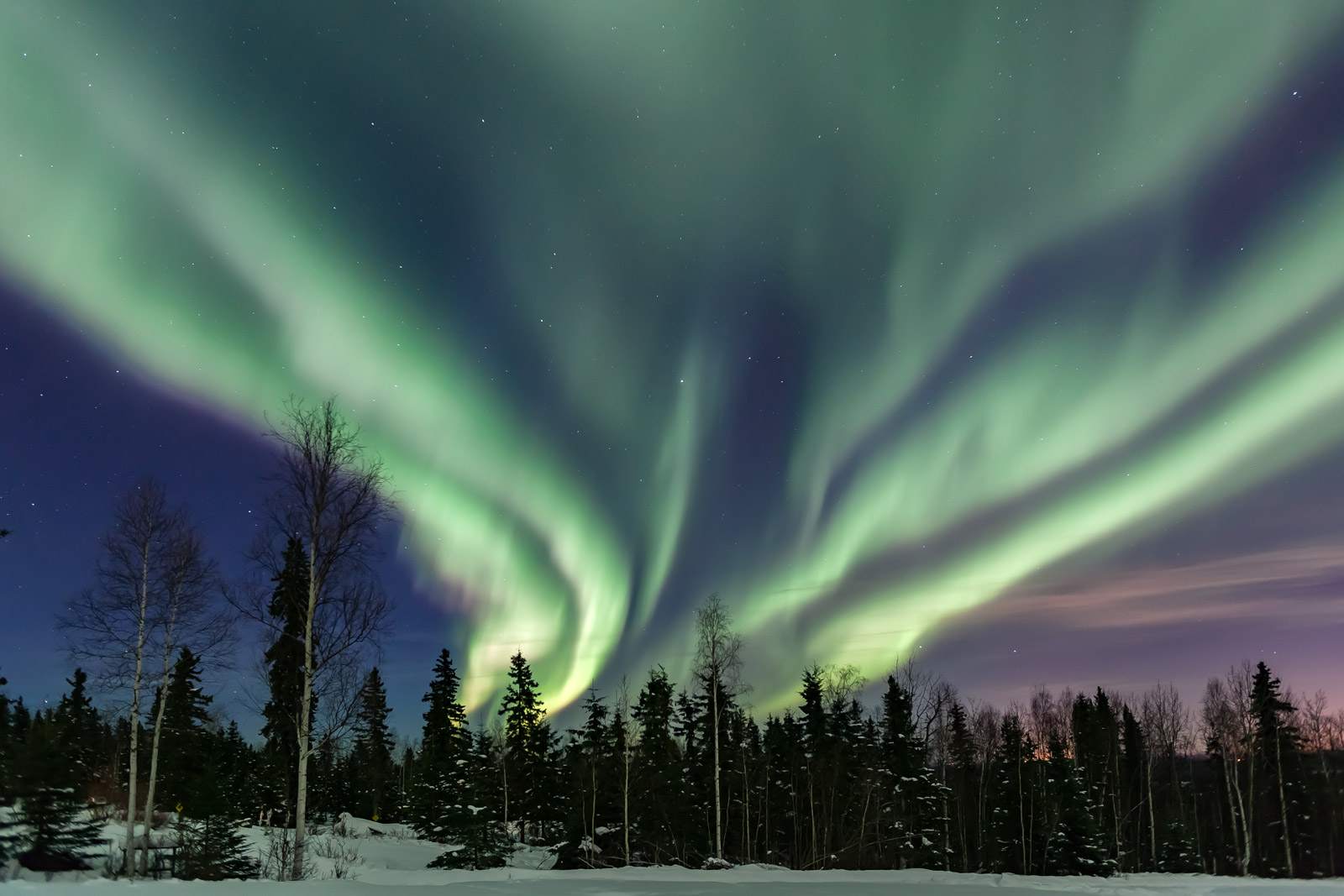 A Limited Edition, Fine Art photograph of a huge sprawling aurora looking like green fire in the sky over the trees in Fairbanks...