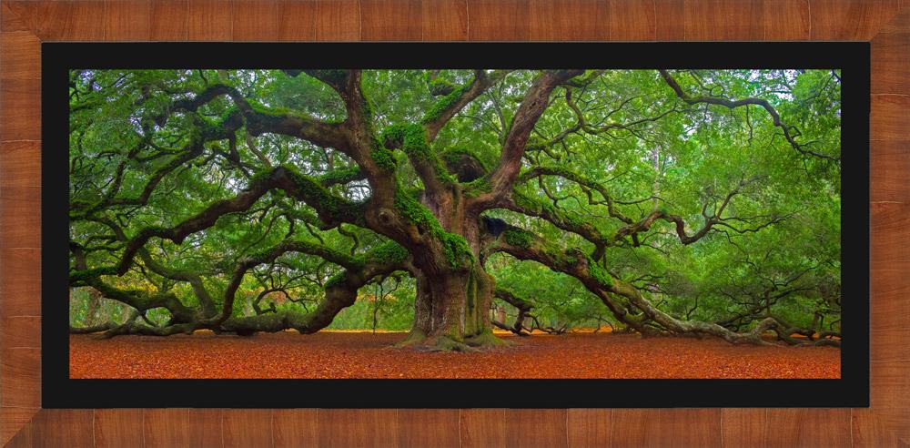 Framed landscape photo of Angel Oak Tree with black mat