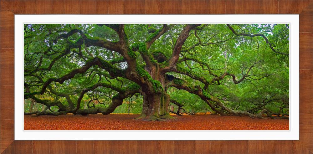 Framed landscape photo of Angel Oak Tree with white mat