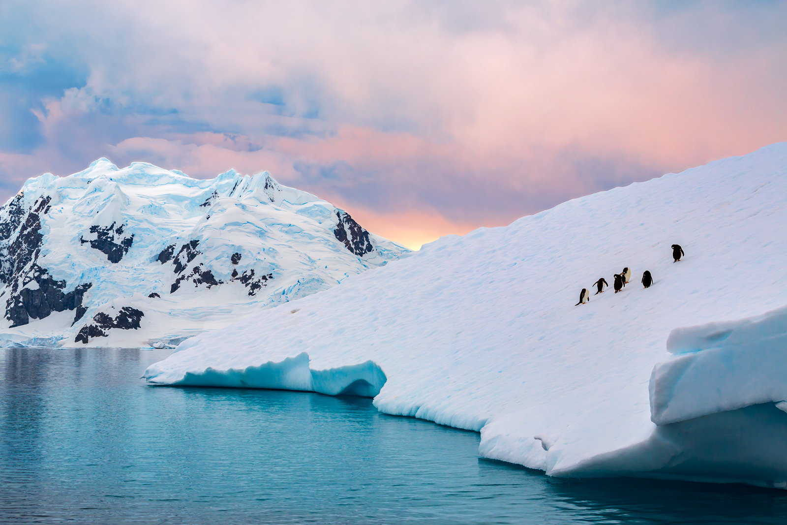 photo of penguins on iceberg in Antarctica