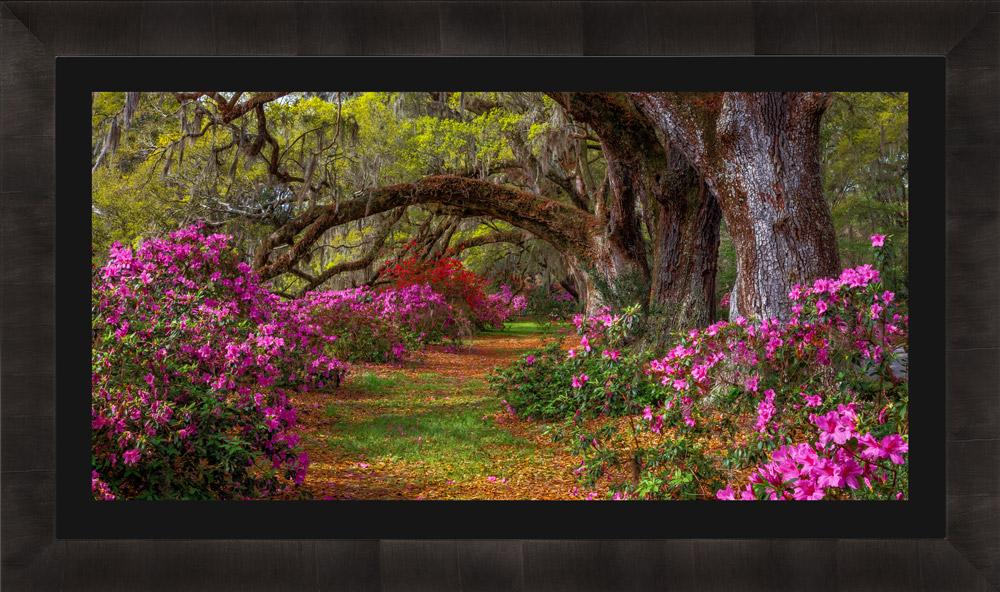 Framed landscape photo of spring flowers with black mat
