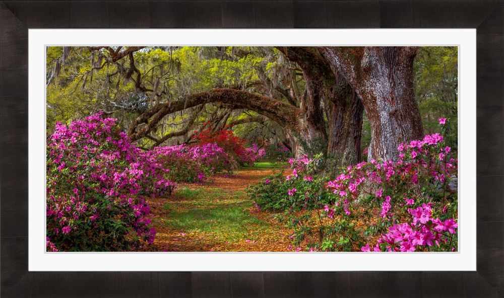 Framed landscape photo of flowers with white mat