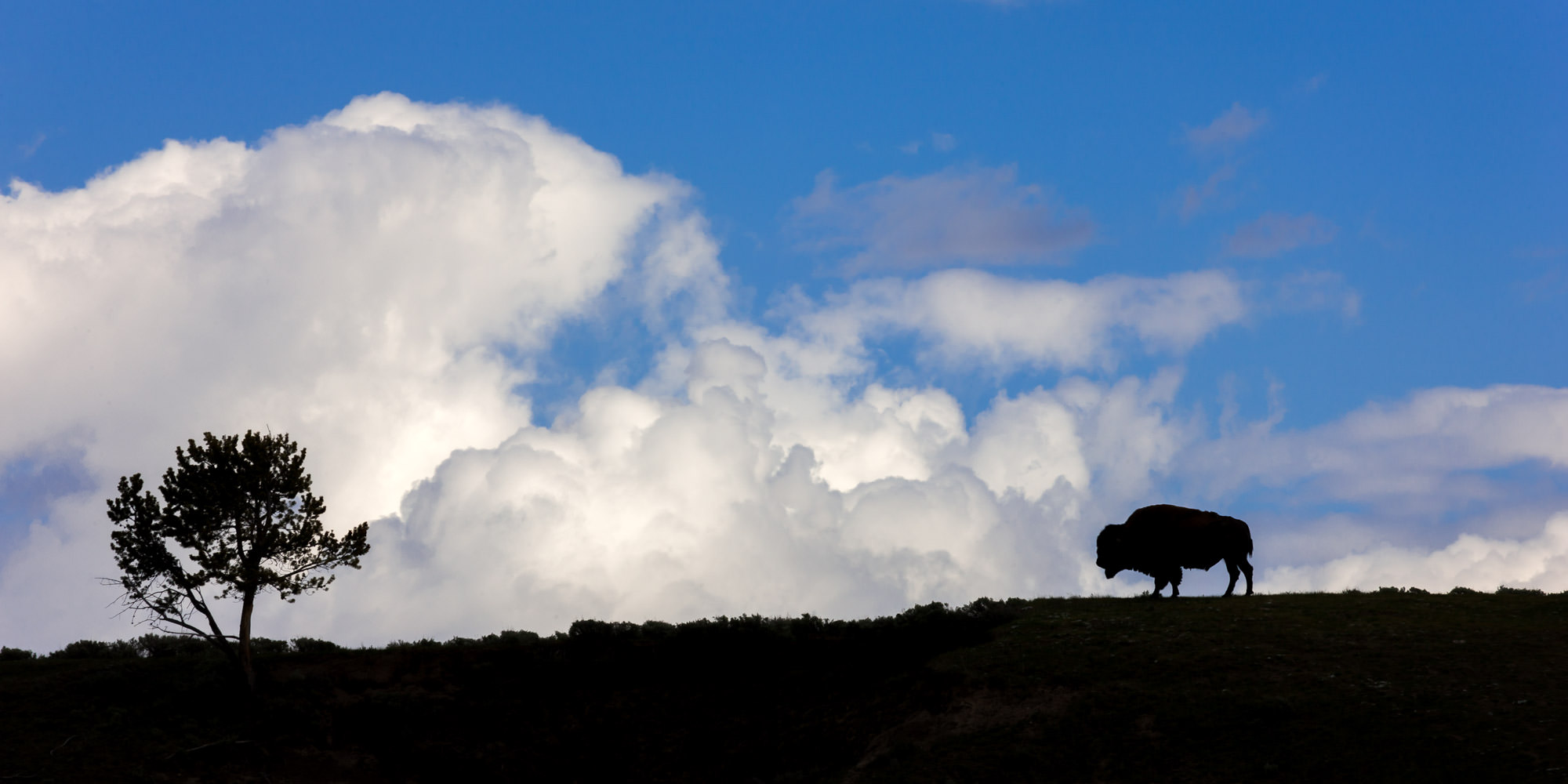 Wyoming, Yellowstone, Bison, clouds, limited edition, photograph, fine art, wildlife, photo