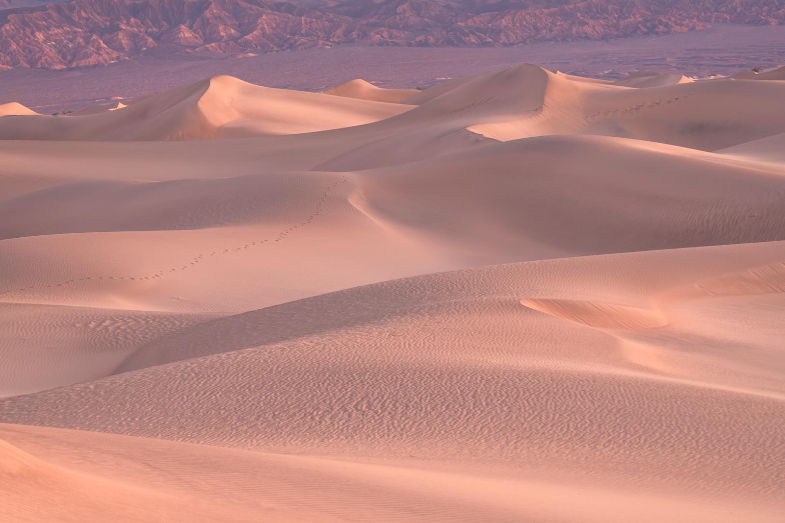 California, Death Valley, Mesquite, Sand, Dunes, Sunrise, photo