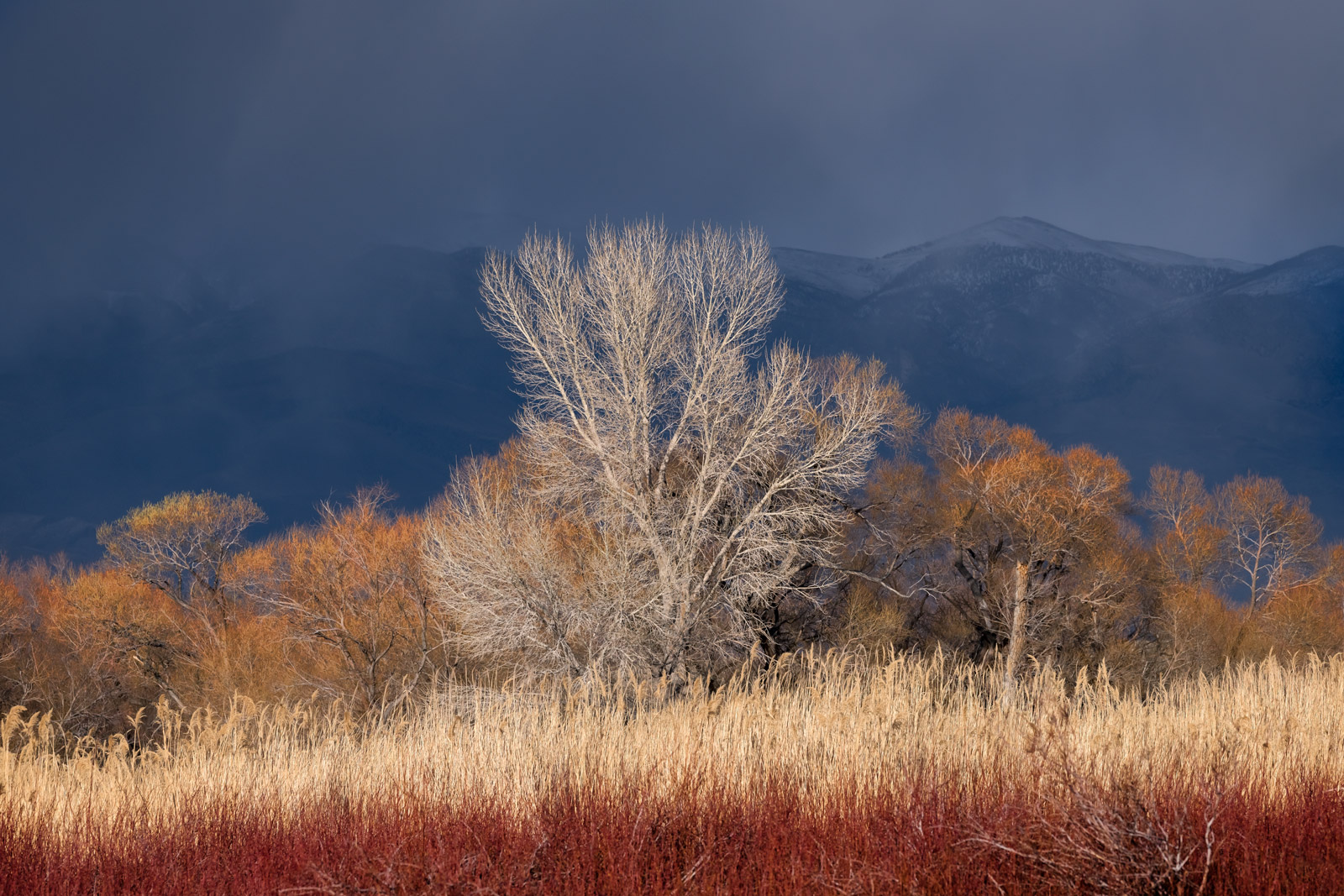 California, Trees, Eastern Sierra, photo
