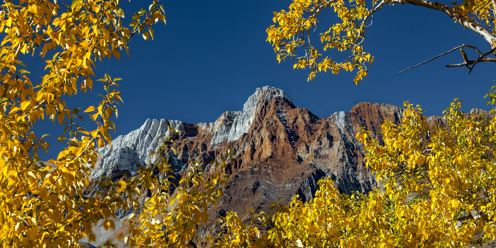 A Limited Edition, Fine Art photograph of Mount Baldwin through the trees with fall color in the Eastern Sierras of California...