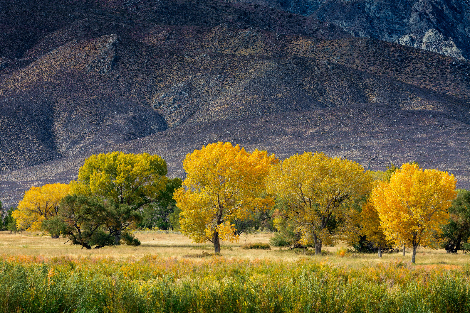 California, Eastern Sierra, Fall, Color, limited edition, photograph, fine art, landscape, fall color, photo