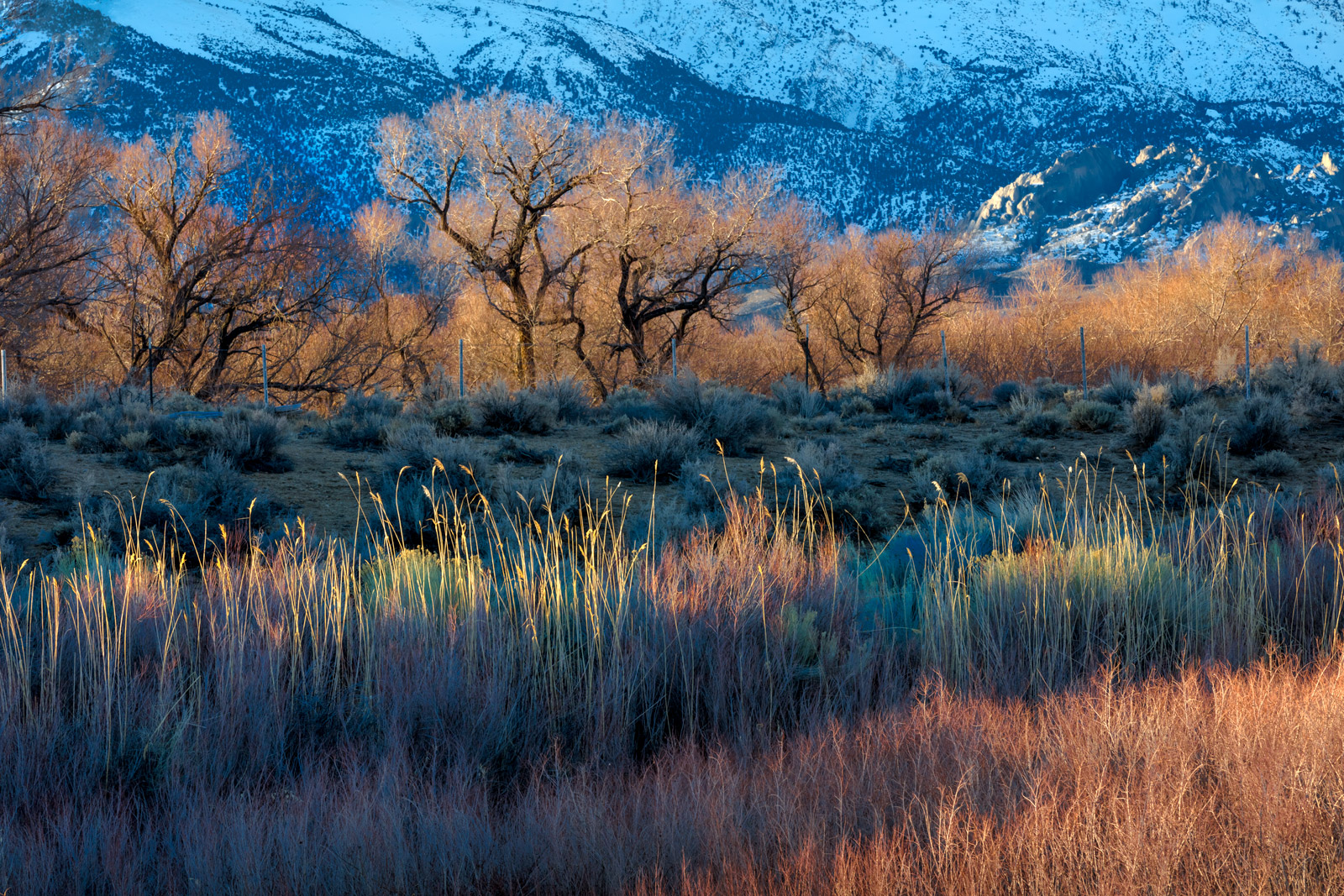 A Limited Edition, Fine Art photograph of layers of colors in the trees and foliage of the Eastern Sierra Mountains during the...