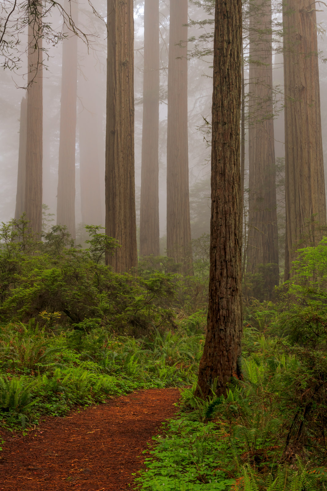 California, Redwoods, Fog, Del Norte, photo