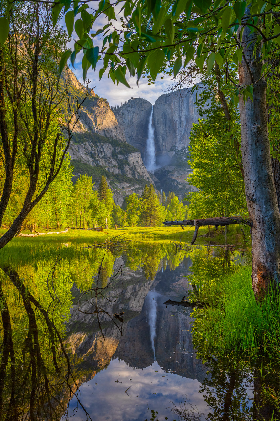 A Limited Edition, Fine Art photograph of Yosemite Falls reflecting under a tree in the edge of the Merced River at Yosemite...