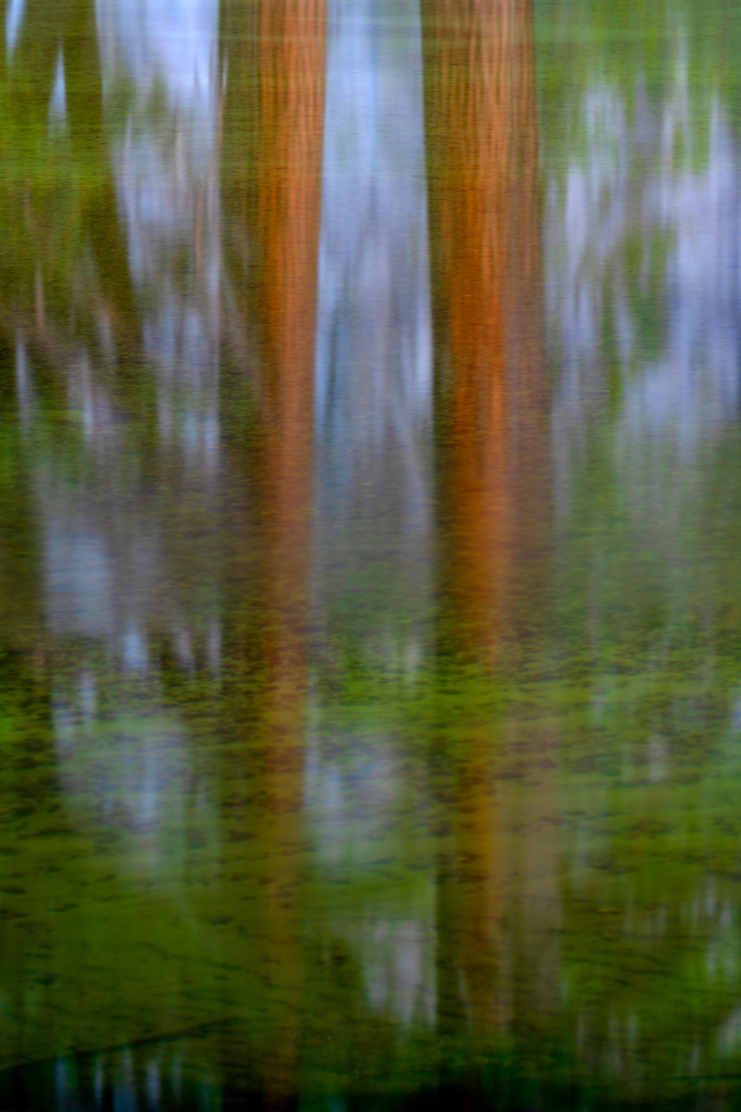 A Limited Edition, Fine Art photograph of two Redwood trees reflecting in the Merced River at Yosemite National Park in California...