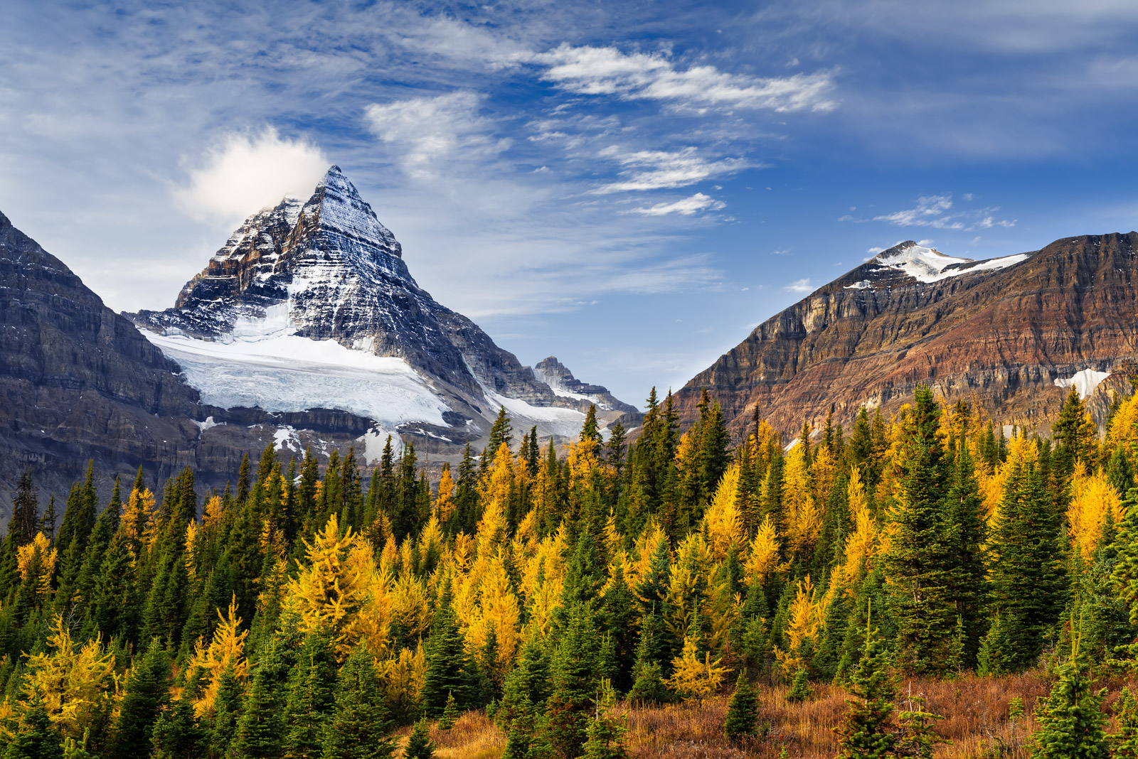 A Limited Edition photograph of Larch trees near Mount Assiniboine in the Canadian Rockies displaying their fall colors in front...