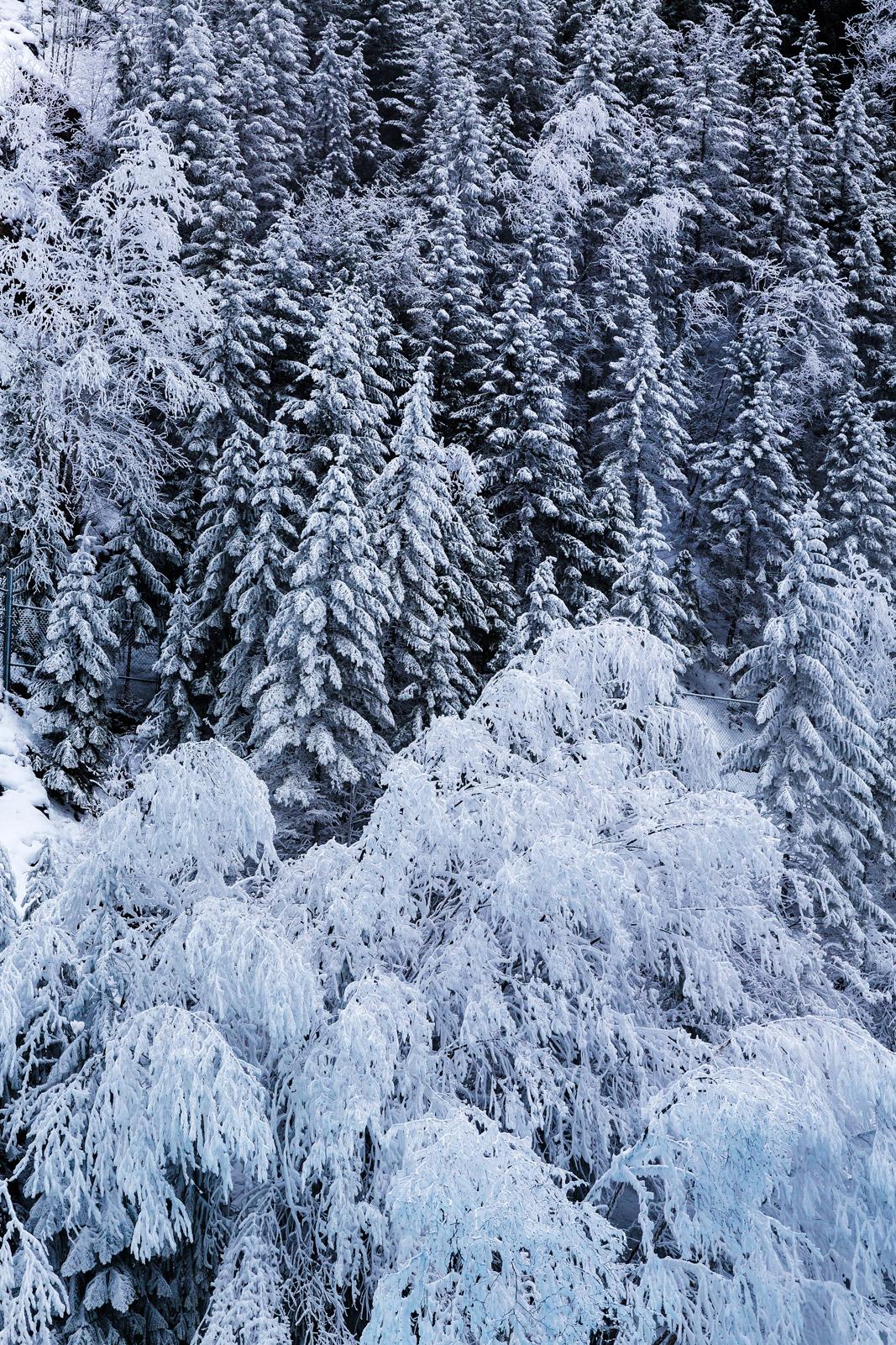 British Columbia, Canada, Winter, Frost, Ice, Winter Scene, photo