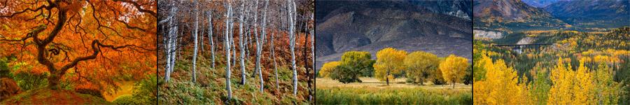 Fall Color Oregon Utah Washington Landscape Photography