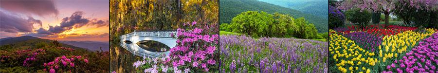 Springtime and Flower Landscape Photography