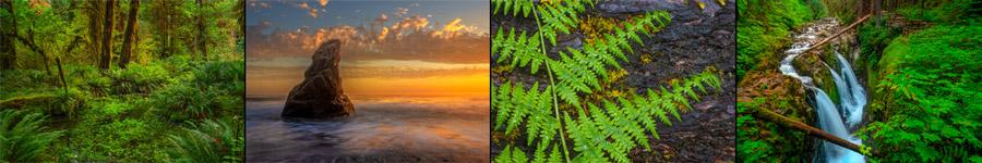 Olympic National Park Landscape Photgraphy
