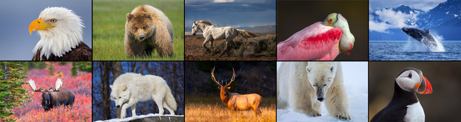 Collage of Wildlife Photography images