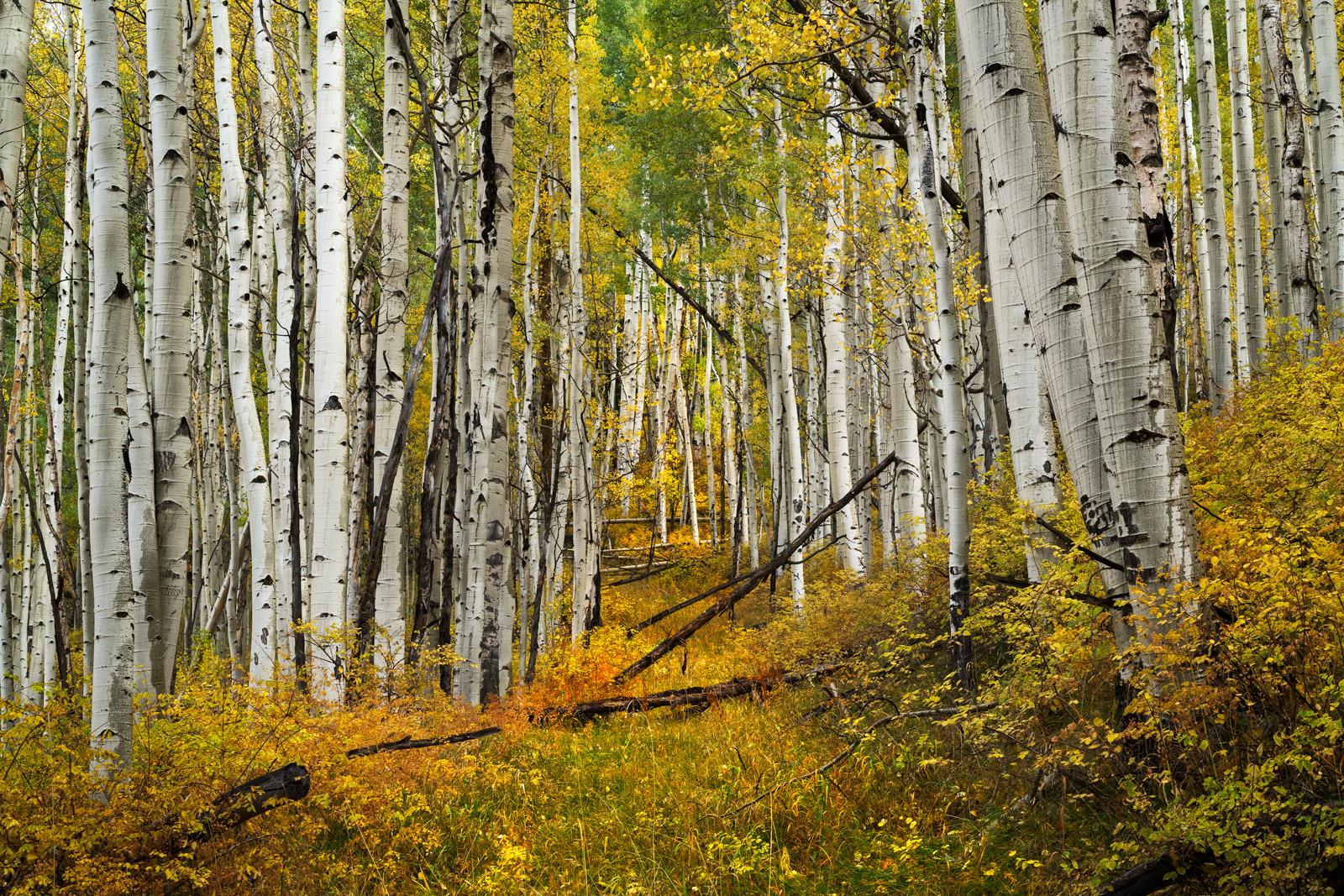 Colorado, Telluride, Fall, Color, Path, Road, photo