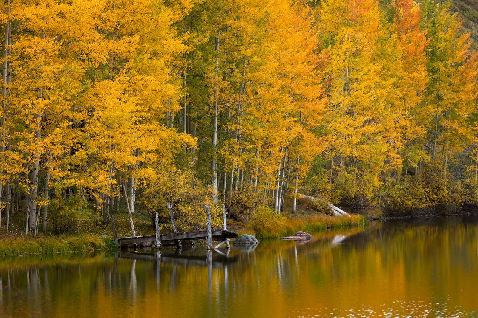 Colorado, Telluride, Cushman, Lake, Fall, Color, Reflection