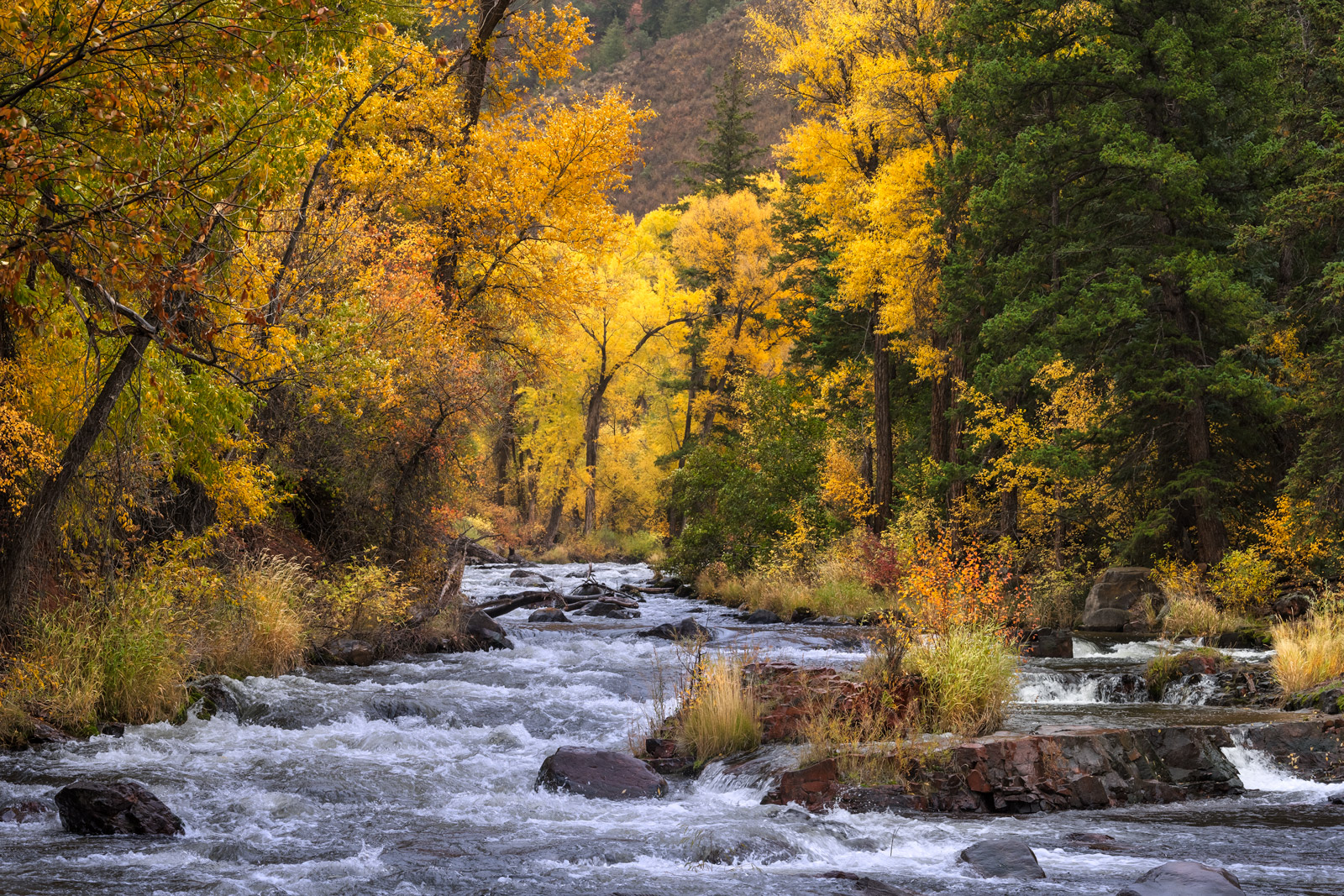 Colorado, River, fall, Cottonwood, Aspen
