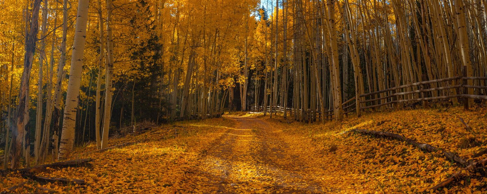 A Limited Edition, Fine Art landscape photograph of a leaf covered back road next to a wooden fence and surrounded by brilliant...