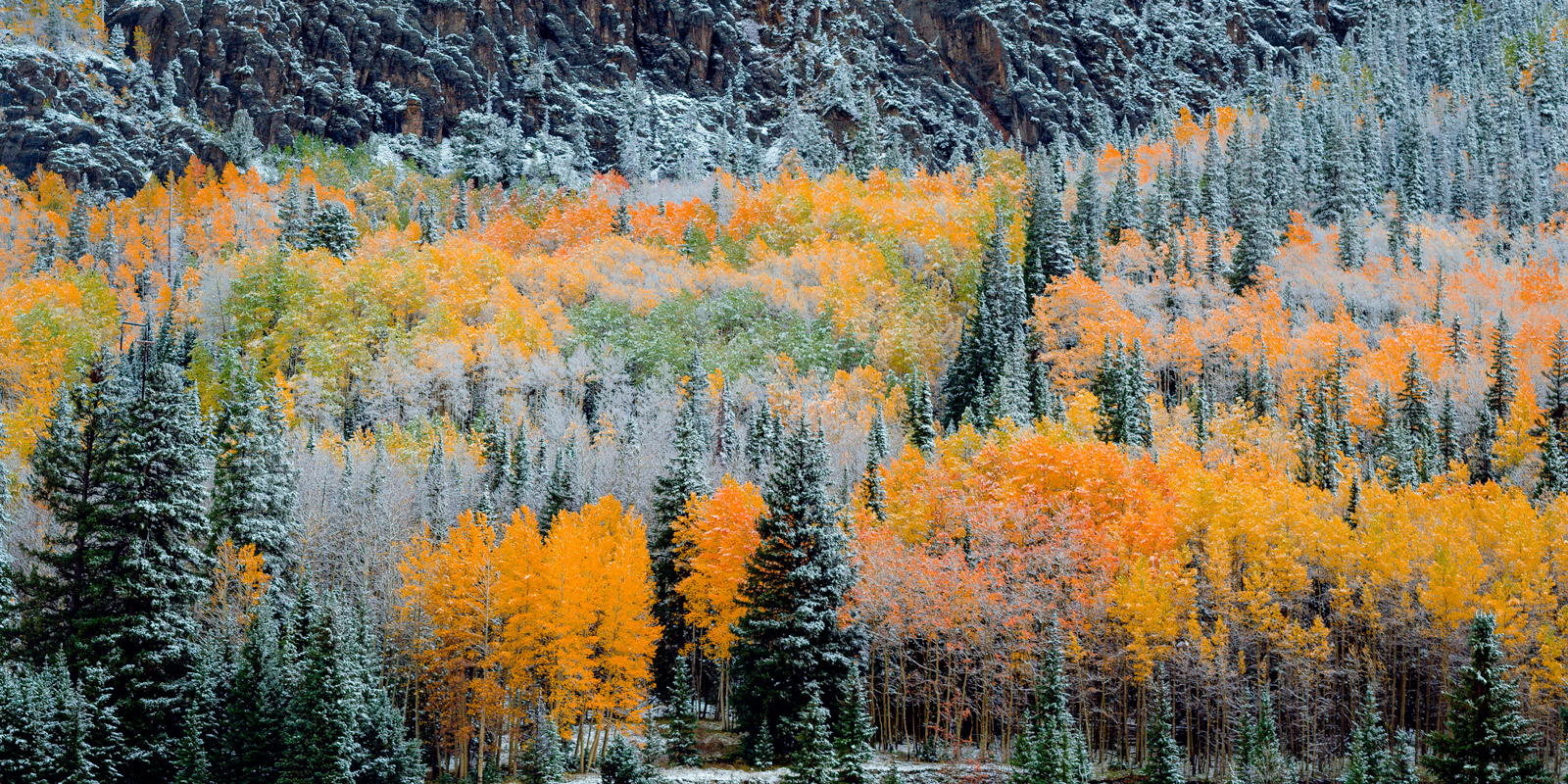 Colorado, Fall, Color, Snow, Trees