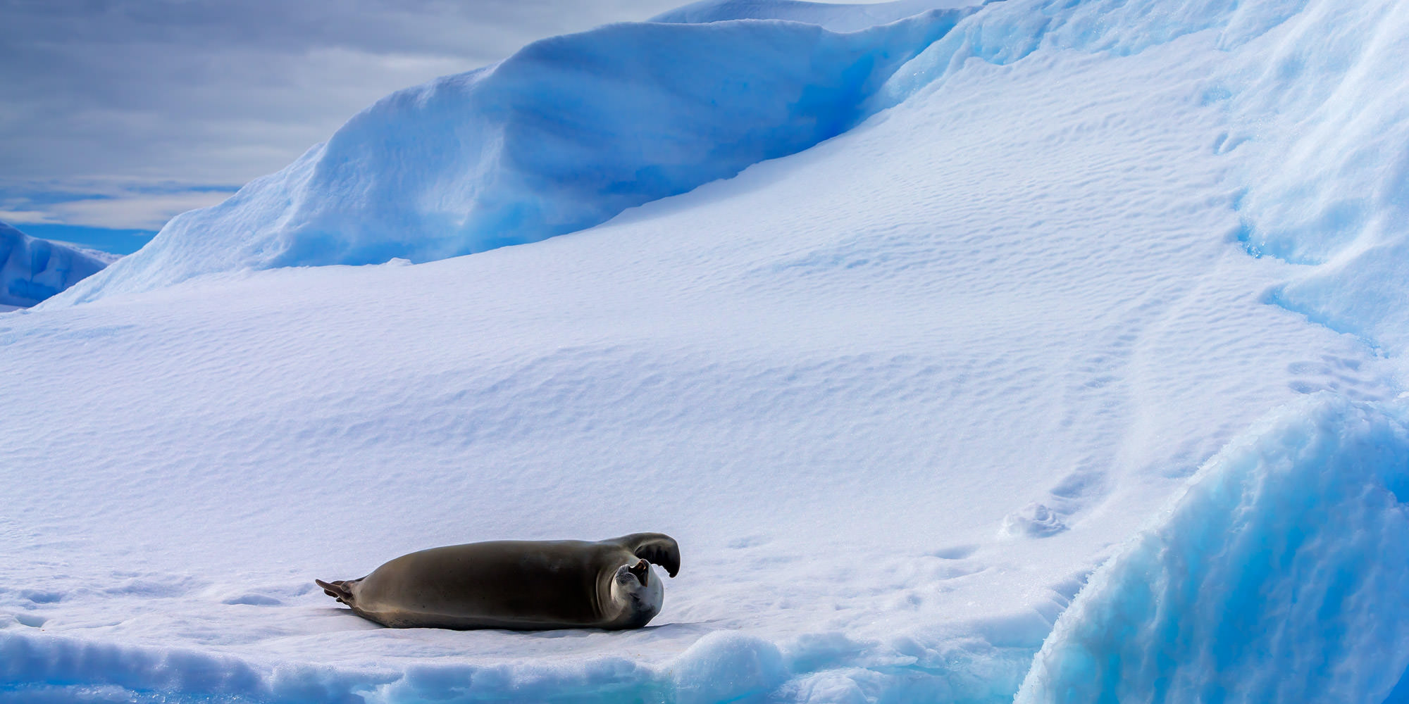 Seal, Crabeater Seal, Antarctica, limited edition, photograph, fine art, wildlife, photo