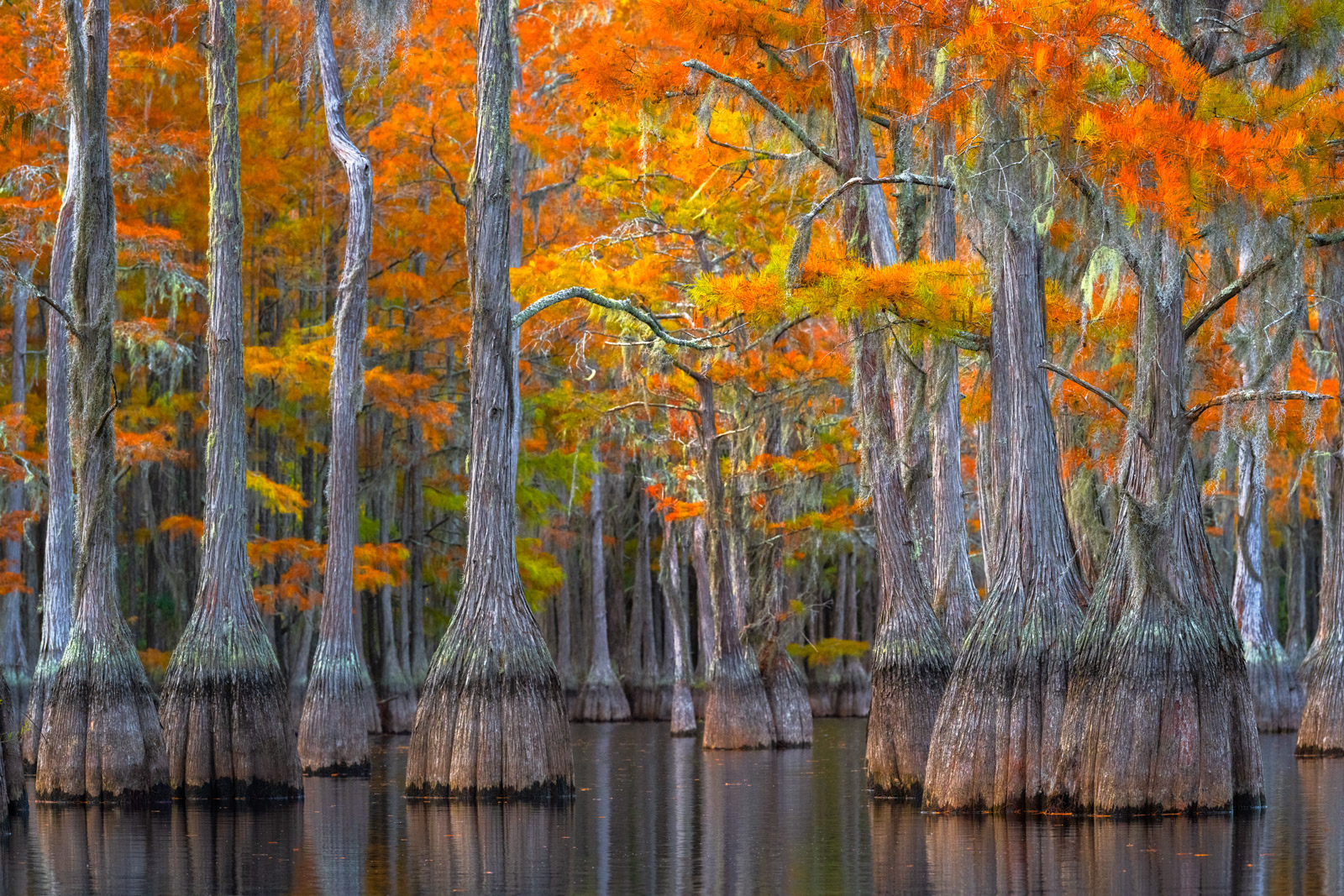 Georgia, Cypress, Swamp, Trees, Fall Color, photo