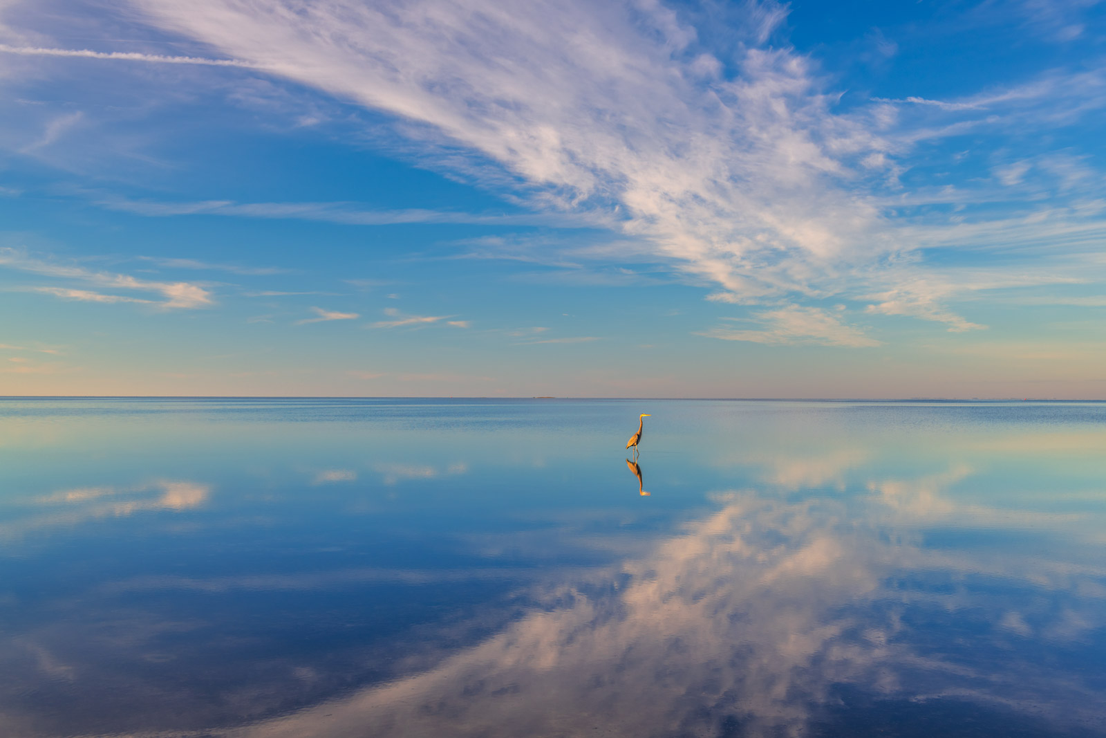 A Limited Edition, Fine Art photograph of an amazing reflection of morning clouds and a Great Blue Heron in the water on the...
