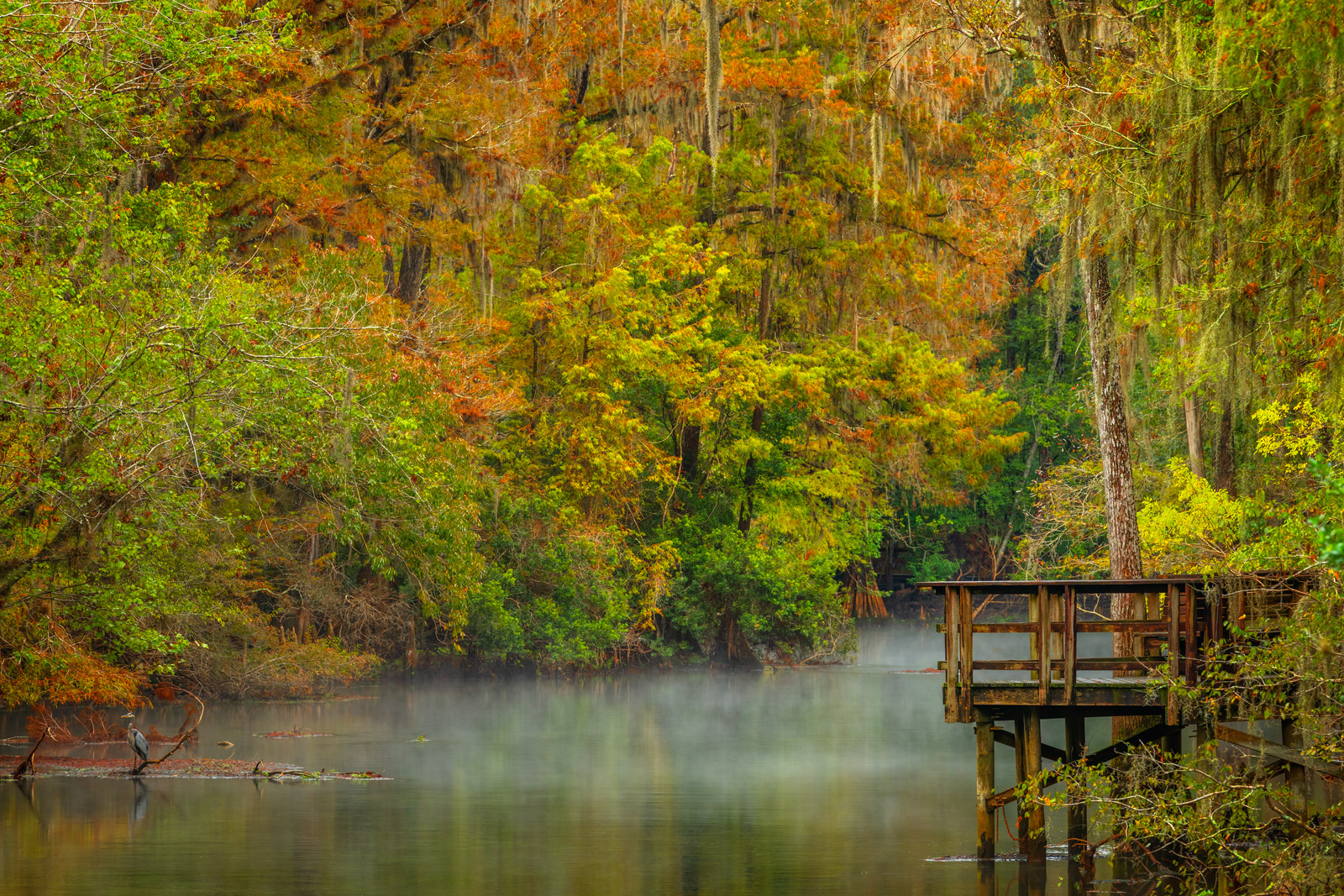 Florida, Manatee Springs, River, Fall, Color, Fog, limited edition, photograph, fine art, landscape, fall color, photo