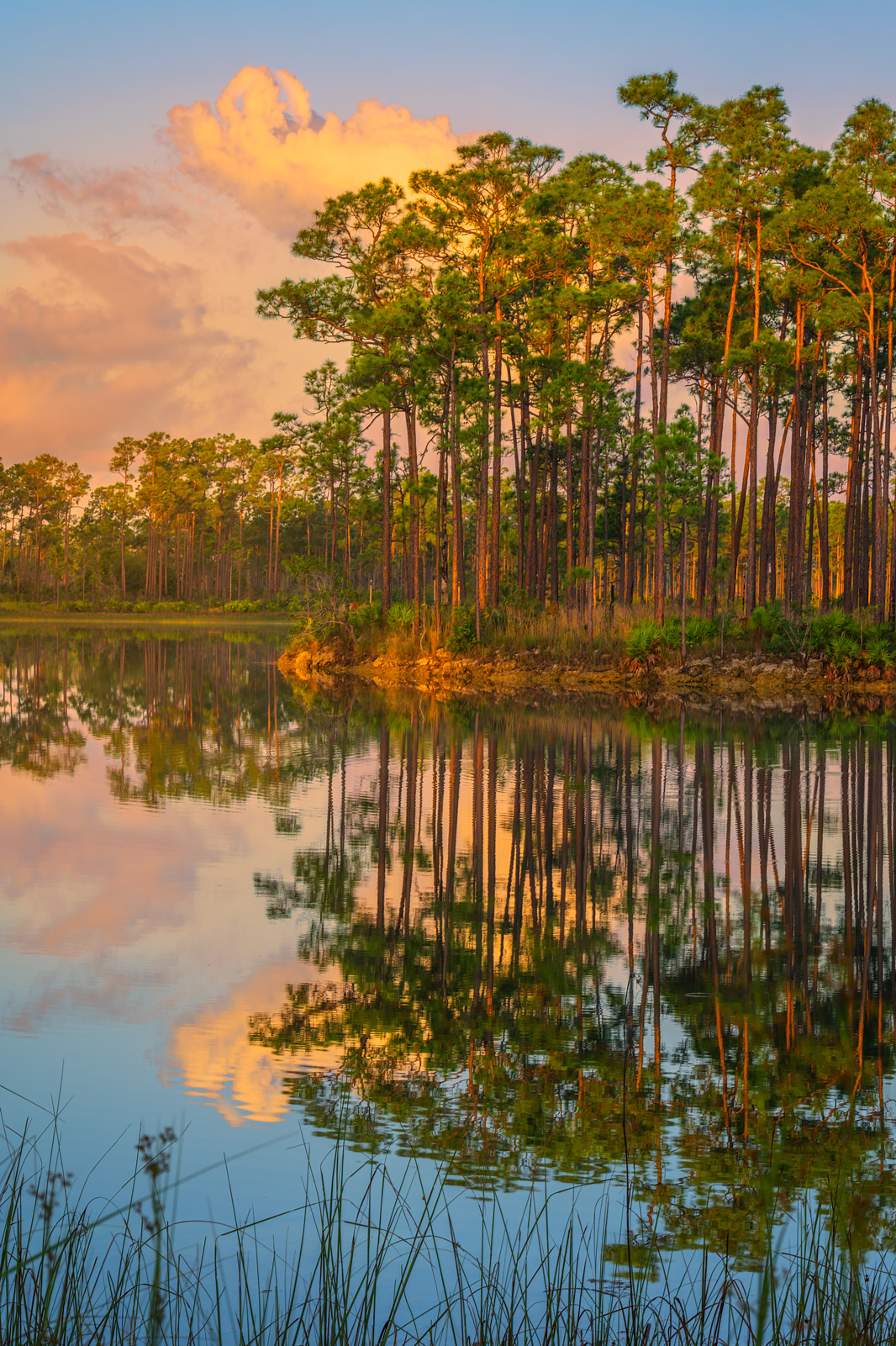 A Limited Edition, Fine Art photograph of sunrise light on Long Pine Key in the Florida Everglades. Available as a Fine Art print...