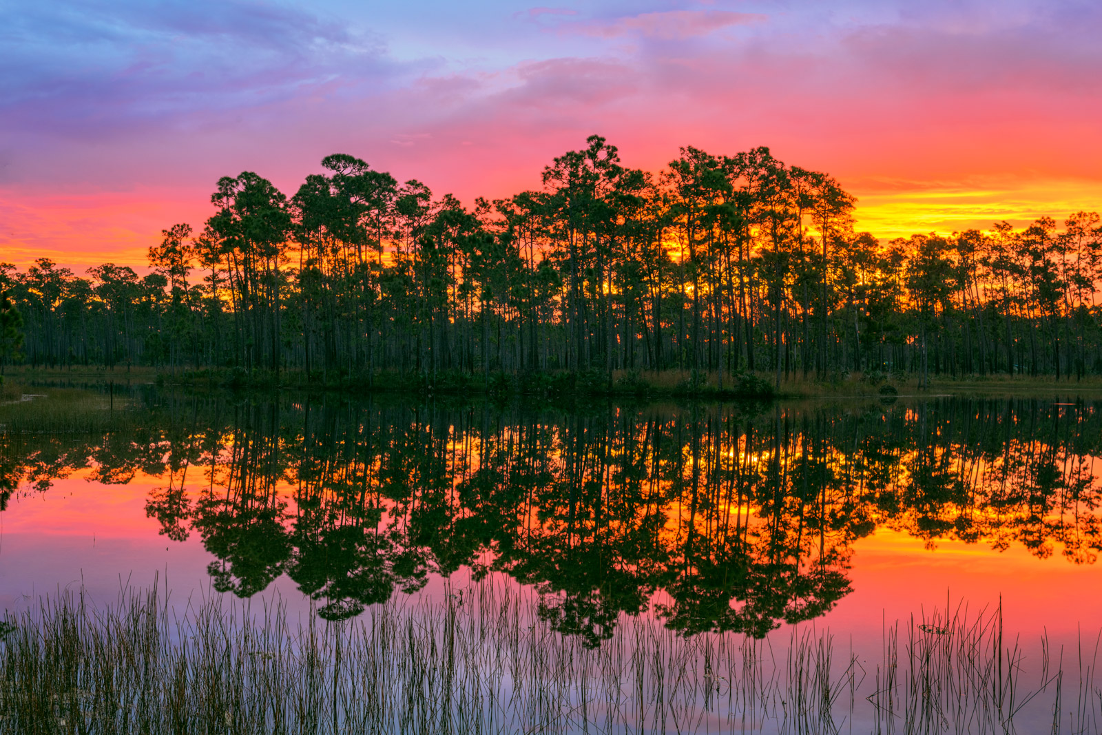 A Limited Edition, Fine Art photograph of a stunning sunrise at Long Pine Key in the Florida Everglades. Available as a Fine...
