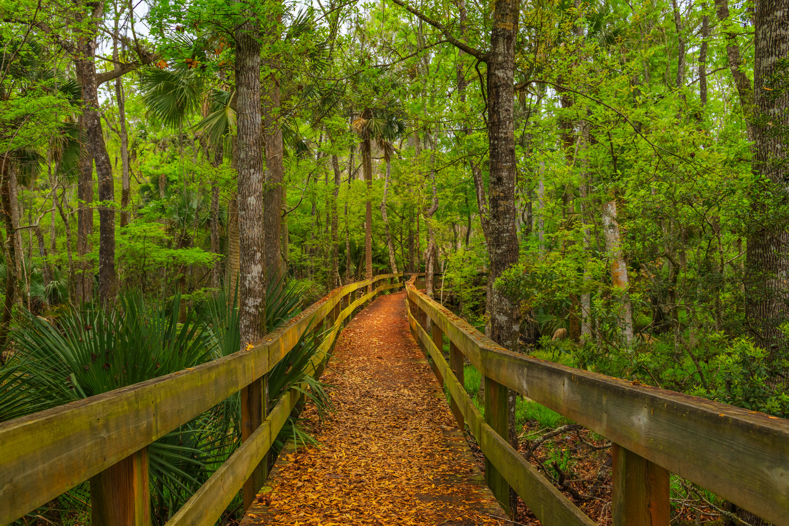 Florida, Woods, Hammock, Boardwalk, Leaves, limited edition, photograph, fine art, landscape, forest, tree, photo