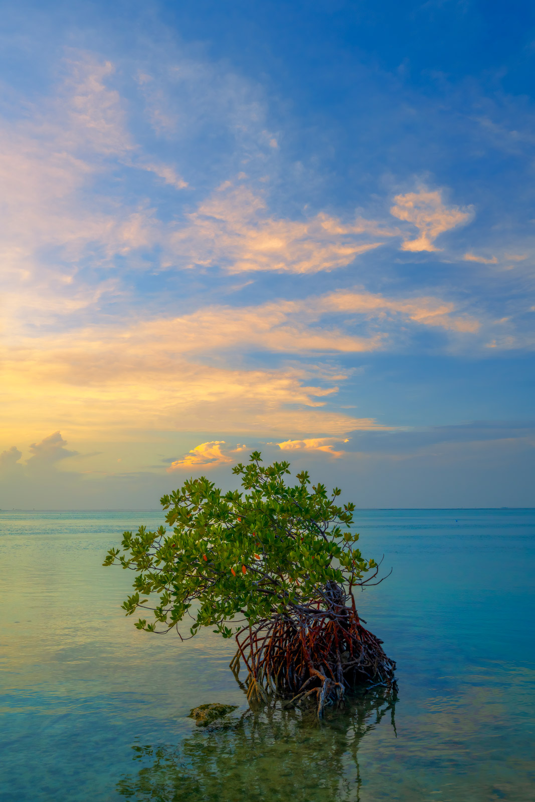 A Limited Edition, Fine Art photograph of a mangrove during a beautiful sunset in the Florida Keys. Available as a Fine Art print...