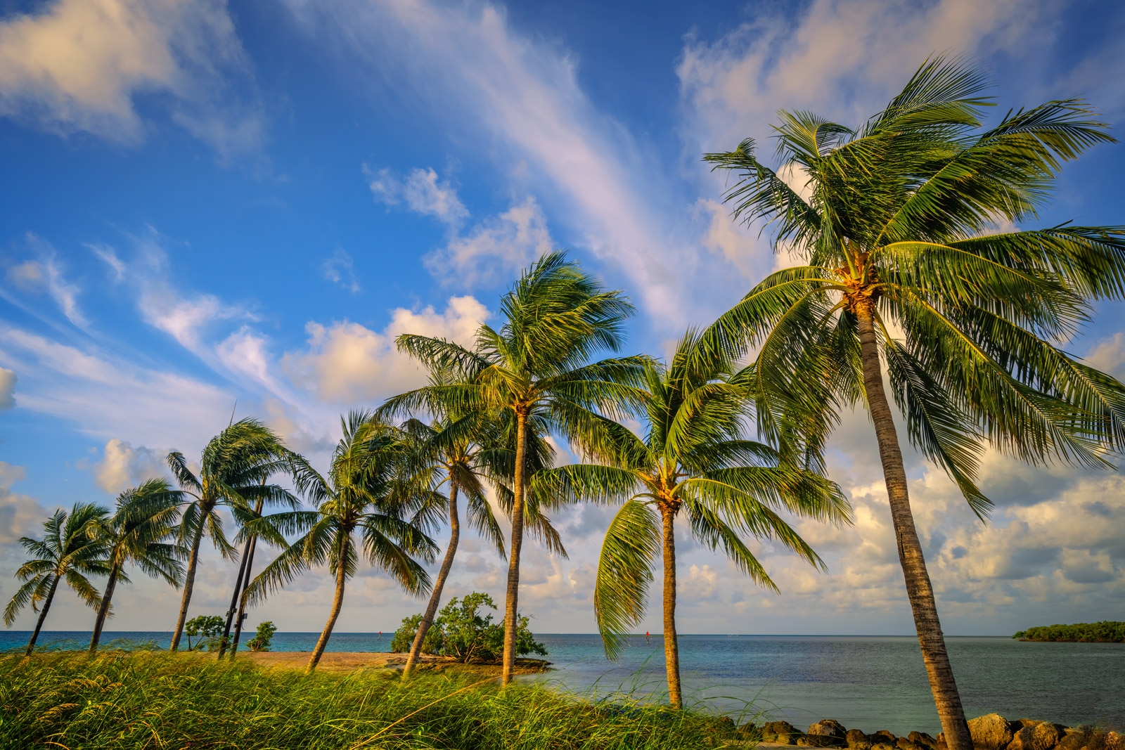 A Limited Edition, Fine Art photograph of a row of eight palm trees in soft morning light in the Florida Keys. Available as a...