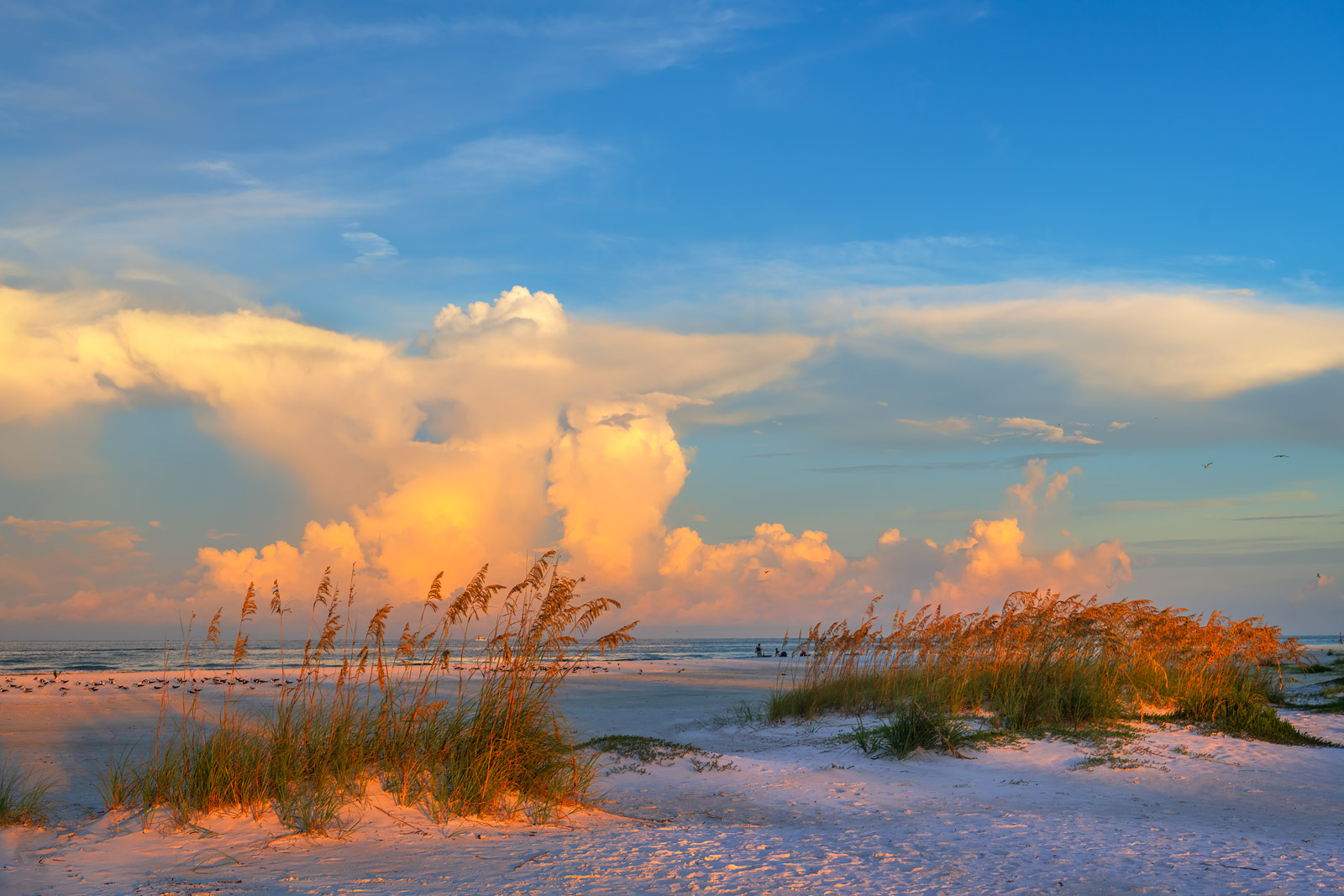 A Limited Edition, Fine Art photograph of small sand dunes with sea oats on the Gulf Coast at Lido Key, Florida. Available as...
