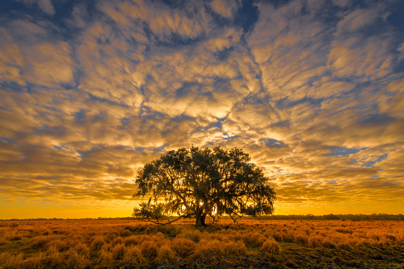 Florida, Sunrise, Oak, Tree, photo