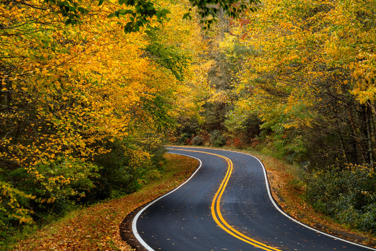 Georgia, Chatahoochee, Fall Color, Fall, Mountain, Road, limited edition, photograph, photo